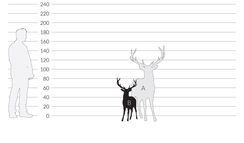 LARGE<br/>STAG